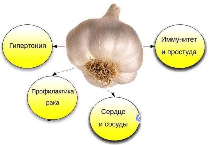 lechebnye-svojstva-chesnoka-2